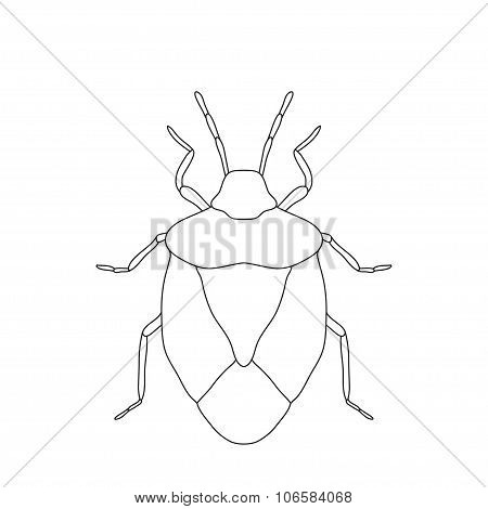 Shield Bug. Palomena Prasina. Sketch Of Shield Bug.  Shield Bug Isolated On White Background.