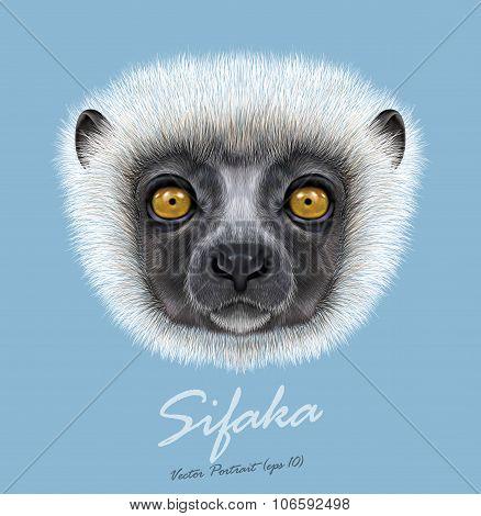 Vector Illustrated Portrait of Sifaka Lemur.