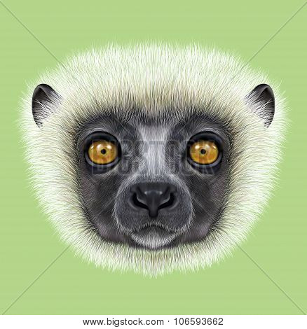 Illustrated Portrait Of Sifaka Lemur