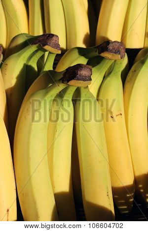 Yellow Cavendish Bananas