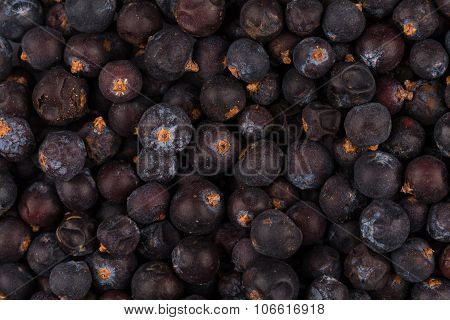 Dried Black Currant
