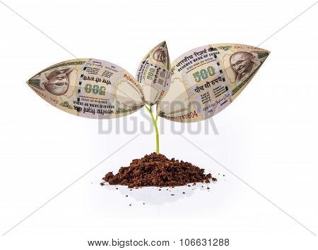 indian currency note growing on plant, money plant, money on tree, currency tree, indian rupee and p