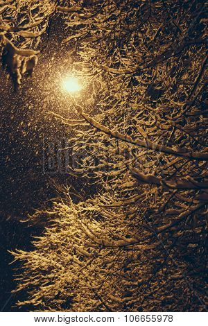 Tree Covered With Snow At Night