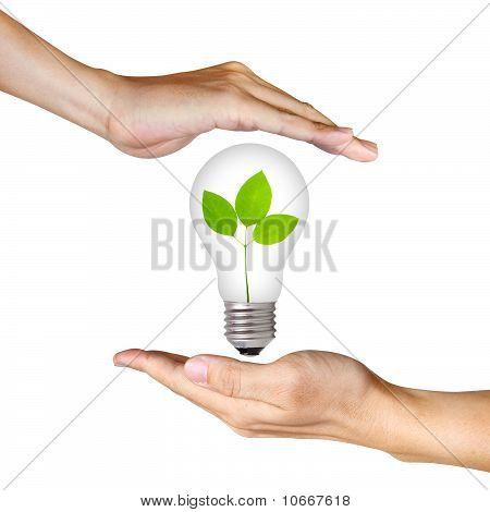 Plant Inside Light Bulb Between Two Hands