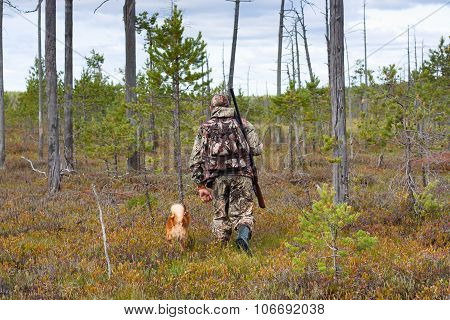 Hunter With Dog Walking In The Swamp Pine Forest