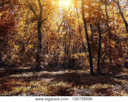 Small Clearing In The Autum Forest Lit By The Sun