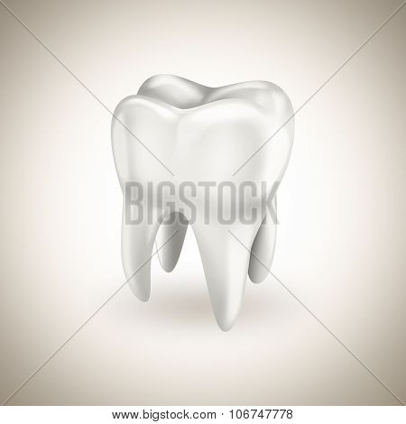 Healthy White Tooth