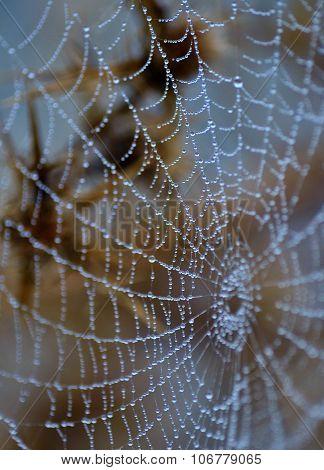 Tiny dewdrops on fine cobweb