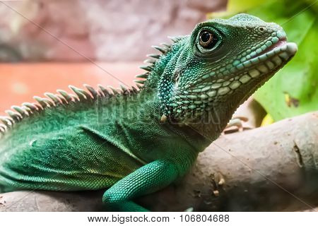 lizard with spikes on bruch in terrarium poster