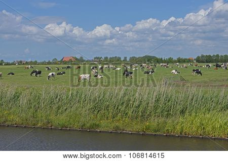 Pasture with cows