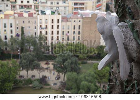 Stone Dove  above the Placa de Guadi
