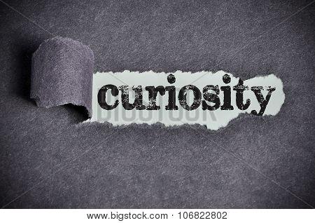 Curiosity  Word Under Torn Black Sugar Paper