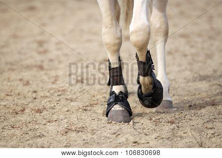 Horse  Legs Close Up