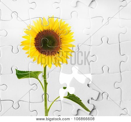 Sunflower And Puzzle, Business Agronomy Conception