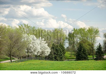 Spring in the Country
