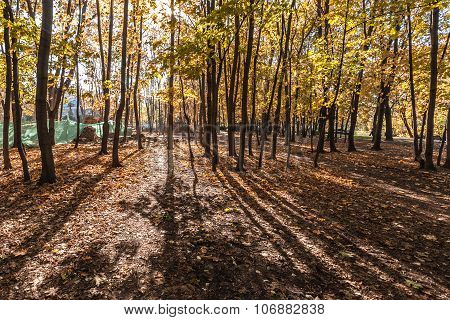 Indian summer in autumn park. Autumn trees cast more long shadows.