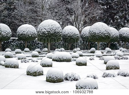 A garden in winter, boxwood and yew trees in the snow.