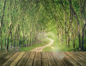 Enchanting Forest Lane in a Rubber Tree Plantation Concept poster
