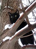winters cat. cat sits on snow-clad tree. poster