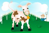 dairy cow on farm with farmercornfield and sky background. poster