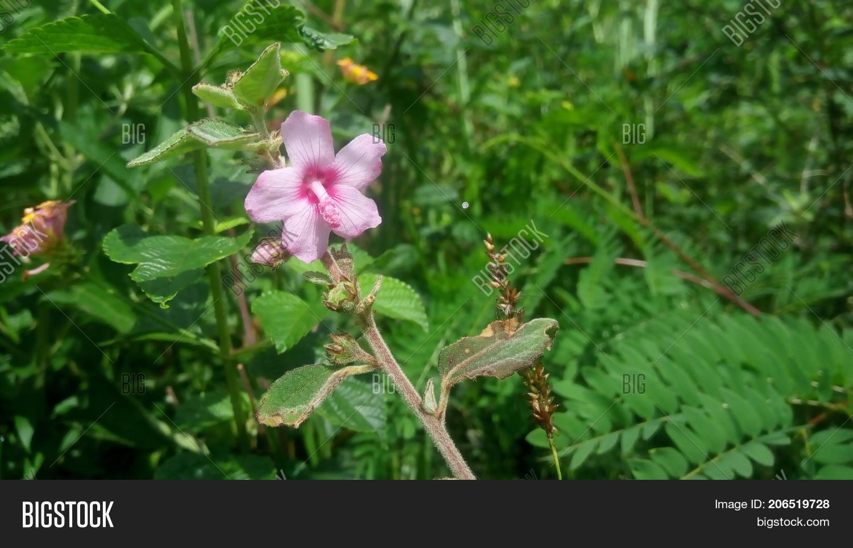 This Flower Belongs Image Photo Free Trial Bigstock