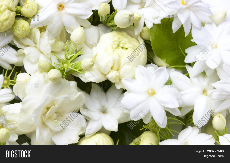 White jasmine flowers image photo free trial bigstock white jasmine flowers fresh flowers natural backgrounds izmirmasajfo
