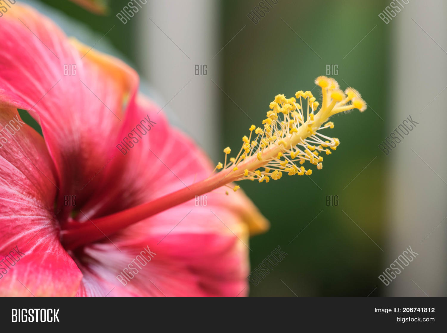 Extreme Close Image Photo Free Trial Bigstock