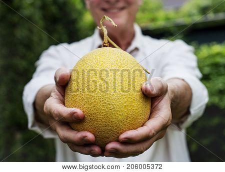 Hands holding honeydew organic produce from farm
