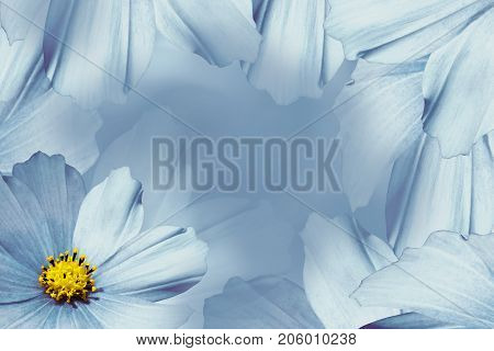 Floral blue-white beautiful background. Flower composition. White-blue flower daisy. Petals of flowers close-up. Nature.