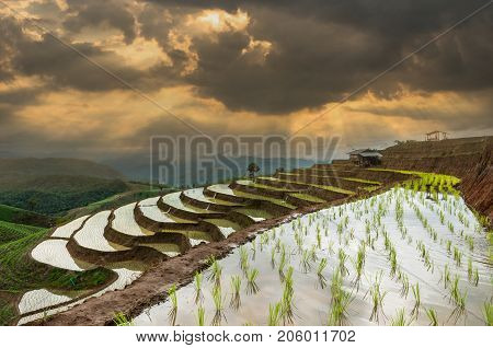 Bann Pa Bong Pieng rice terraced field with Unidentified Mountaineer are walking on the ridge between planting rice in far away Mae Chaem Chiang Mai Thailand