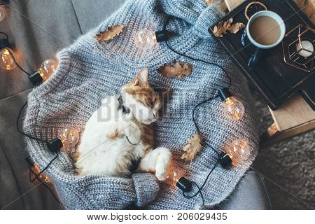 Lazy cat is sleeping on soft woolen sweater on sofa, decorated with led lights. Winter or autumn weekend concept, top view.