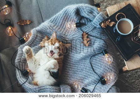 Lazy cat sleeps and yawns on soft woolen sweater on sofa, decorated with led lights. Winter or autumn weekend concept, top view.
