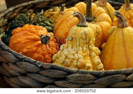 Autumnal Decoration With Pumpkins