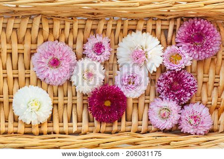 Designer floral arrangement of white Daisy flowers pink and maroon shades.