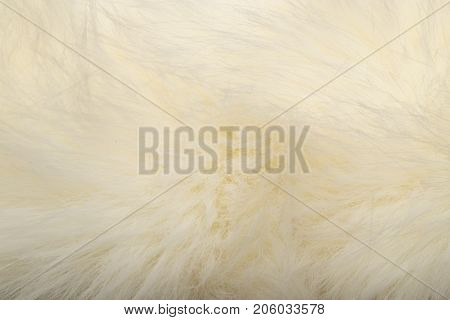background of white fur . Photo of an abstract texture
