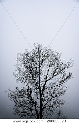 abstraction pattern black and white lonely tree branches background