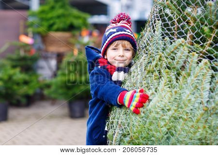 Beautiful little smiling kid boy holding christmas tree. Happy child in winter clothes, hat, gloves choosing xmas tree in outdoor shop. Family, tradition, celebration concept