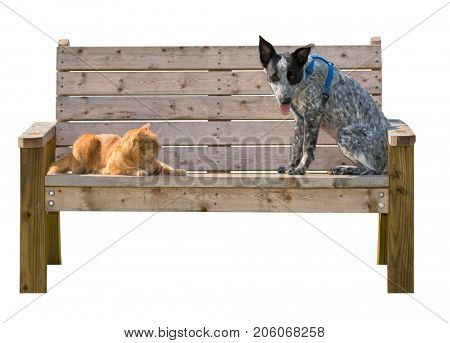 Ginger tabby cat and a black and white spotted dog sitting on a wooden bench, isolated on white