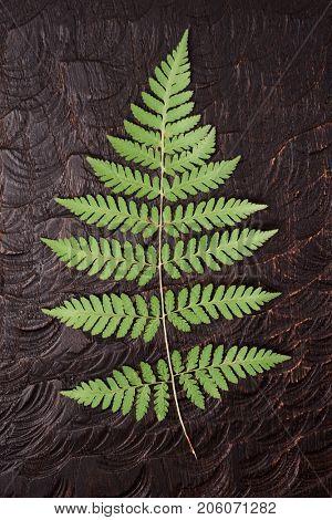 Fern leaf on dark uneven wooden surface