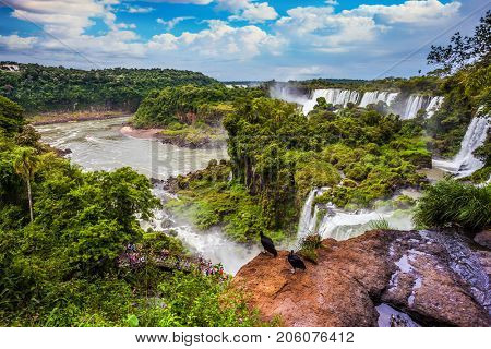 The famous black Andean condors sit on the edge of the ledge. Picturesque basaltic ledges form the  waterfalls. Waterfalls Iguazu. The concept of extreme and exotic tourism
