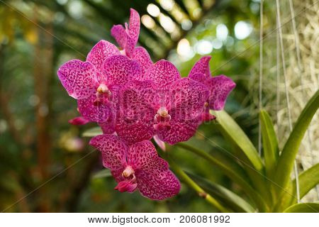 Wild Orchids On Trees
