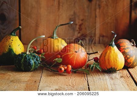Various types of pumpkin on a wooden table. Autumn arrangement: ornamental gourds with rose hips