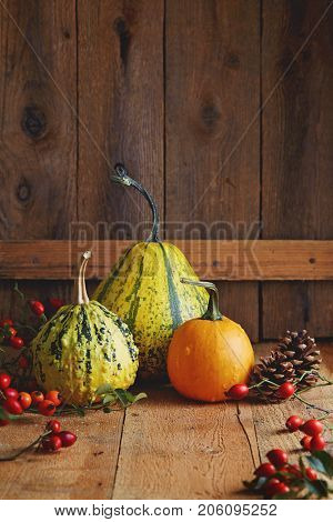 Various types of pumpkin on a wooden table. Arrangement of decorative pumpkins, pine cones and rose hips.