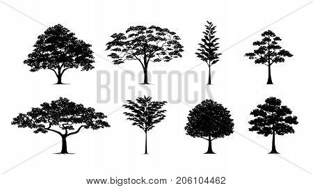 silhouette tree Vector trees in silhouettes set