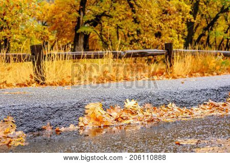 Yosemite National Park Valley at cloudy autumn morning. Fallen yellow autumn leaves on the wet asphalt. California, USA.