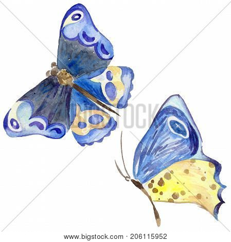 Exotic butterfly wild insect in a watercolor style isolated. Full name of the insect: blue butterfly. Aquarelle wild insect for background, texture, wrapper pattern or tattoo.