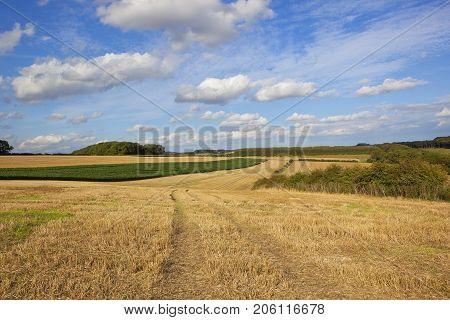 Wheat Stubble And Maize
