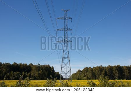 power line through the forest across the meadow