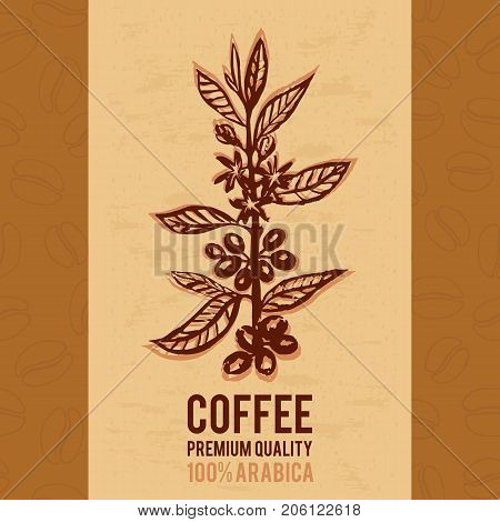 Ready stylish design for coffee packaging or posters with the image of a coffee branch. Plant with leaf, flowers, berry, fruit, seed.  Natural caffeine drink. Hand-drawn vector illustration for shop