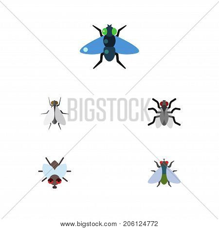 Flat Icon Buzz Set Of Buzz, Gnat, Hum And Other Vector Objects